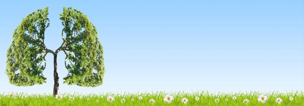 Indoor Air Quality | Zenith Eco Energy
